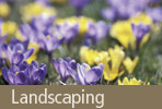 Land Scaping: Turning your vision into plan...